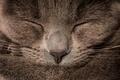 Картинка кот, кошак, спит, котяра