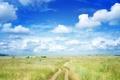 Картинка поле, природа, облака, небо, дорожка, пейзаж