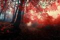 Картинка осень, лес, листья, деревья, природа, туман, красные, red, forest, Nature, листопад, роща, тропинка, trees, autumn, ...