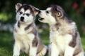 Картинка собаки, трава, уши, нос, глаза, лапы, щенки
