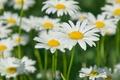 Картинка поле, белый, цветы, желтый, зеленый, фон, widescreen, обои, размытие, лепестки, ромашка, стебель, wallpaper, цветочки, широкоформатные, ...