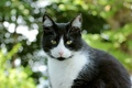 Картинка черно-белая, взгляд, кошка