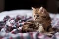 Картинка фокус, кошка, взгляд, мордочка, Daisy, котенок, кот
