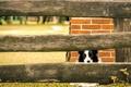 Картинка собака, взгляд, забор, друг