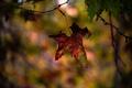Картинка дерево, осенний, лист, ветка, фон