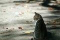 Картинка асфальт, котенок, осень, Листья