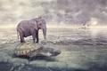 Картинка море, животные, слон, черепаха