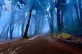 Картинка туман, дорога, лес