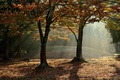 Картинка туман, лучи, осень, лес