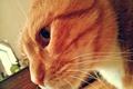 Картинка кошка, киса, Кот, cat, котэ
