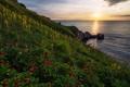 Картинка море, цветы, восход, рассвет, побережье, пионы, Болгария, Black sea, Чёрное море, Bulgaria, Yaylata reserve, Яйлата