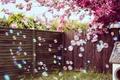 Картинка цветы, пузыри, двор, стены
