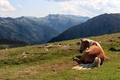 Картинка лето, лошадь, горы