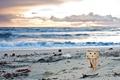Картинка игрушка, данбо, фигурка, пляж, песок, водоросли, danbo, закат