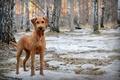 Картинка собака, лес, весна, друг