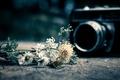 Картинка цветы, фотоаппарат, широкоэкранные, HD wallpapers, обои, камера, flower, полноэкранные, background, fullscreen, широкоформатные, настроения, цветочки, фон, ...