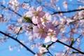 Картинка ветка, небо, весна, цветение