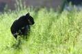 Картинка фокус, цвет, чёрный, поле, трава, охота