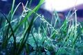 Картинка макро, природа, растения, дождь, зелень, роса, трава, капли
