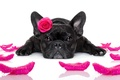 Картинка собака, funny, romantic, cute, love, heart, dog, rose