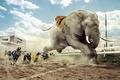 Картинка соревнования, собачьи бега, слон, собаки