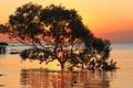 Картинка море, деревья, закат