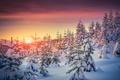 Картинка snow, снег, елки, природа, зима, деревья, tree, winter, sunset, nature, закат
