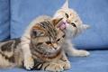 Картинка кошка, коты, любовь, кот, кошки