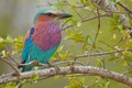 Картинка цвет, дерево, перья, птица, клюв, ветки, листья