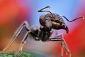 Картинка макро, большой, муравей