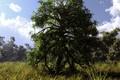 Картинка арт, природа, дерево, klontak, лето, облака, трава, лес