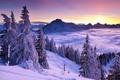 Картинка снег, горы, природа, туман, зима, деревья, ели, небо, облака