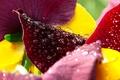 Картинка капли, макро, Цветы, colors, лепестки, flowers, macro, drops