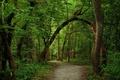 Картинка лето, тропинка, зелень, лес