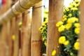 Картинка цветы, flowers, широкоэкранные, HD wallpapers, обои, ограда, дерево, полноэкранные, flower, ограждение, background, желтый, fullscreen, макро, ...