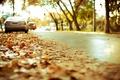 Картинка автомобили, жёлтая, дорога, асфальт, шоссе, город, размытость, листва, посадки, осень, эффект