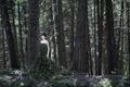 Картинка лес, девушка, ветки