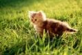 Картинка трава, Котенок, зеленый