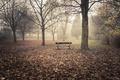 Картинка осень, природа, парк, скамья