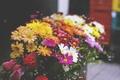 Картинка цветы, лепестки, букет