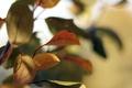 Картинка красные, осень, листья, желтые