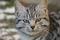 Картинка портрет, кошка, кот
