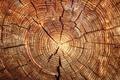 Картинка wood, pattern, rings, cutting