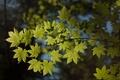 Картинка макро, листва, ветка, природа