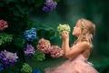 Картинка соцветия, цветы, настроение, гортензия, девочка