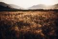 Картинка утро, поле, природа