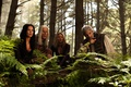 Картинка Легенда об Искателе, fern, Tabrett Bethell, Legend of the Seeker, Бриджит Риган, Kahlan Amnell, Cara ...