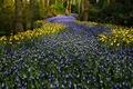 Картинка цветы, Keukenhof, Нидерланды, парк, гиацинты, деревья, тюльпаны