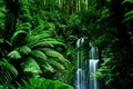 Картинка водопад, лианы, листва, зелень, Джунгли