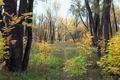 Картинка Сибирь, Осень, лес, листья